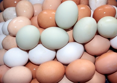 White Eggs vs Brown Eggs
